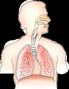 肺や気管支