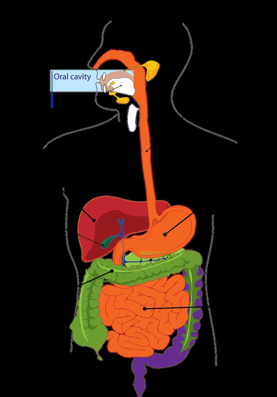 急性膵炎の保険加入