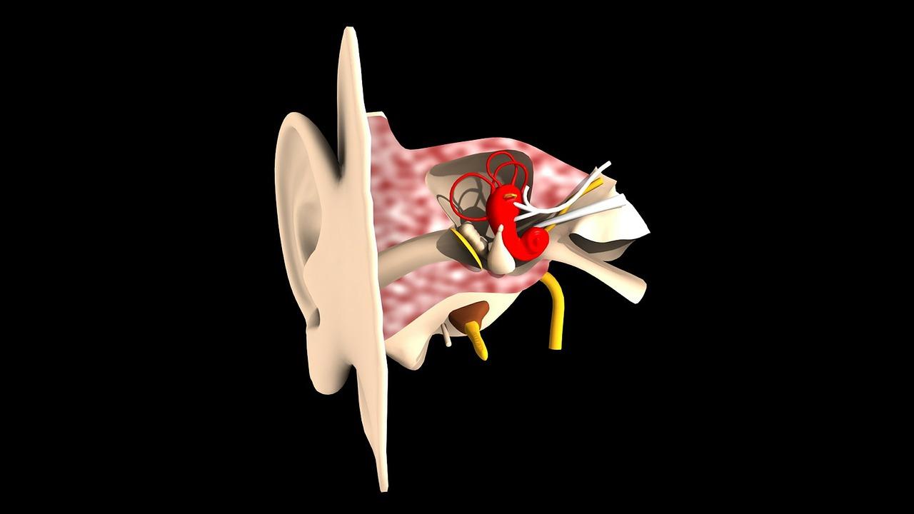 中耳炎の保険加入